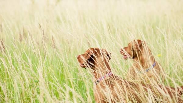 La Universidad de Nebraska estudia 200 perros para saber cómo piensan